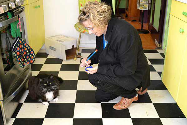 Training a cat using positive rewards.