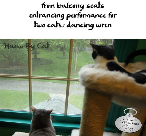 4-Haiku by Cat concert dancing wren Haiku Day
