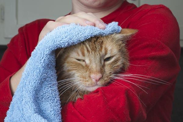 4-Towel shutterstock_240847891