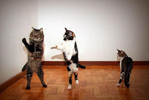 dancing cat ÒàïÒàïÒàï..