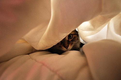Chat cach├® - Hidden cat