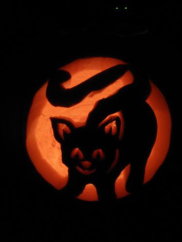 Cat pumpkin carving ideas for halloween catster