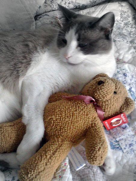 cat 3116 problems