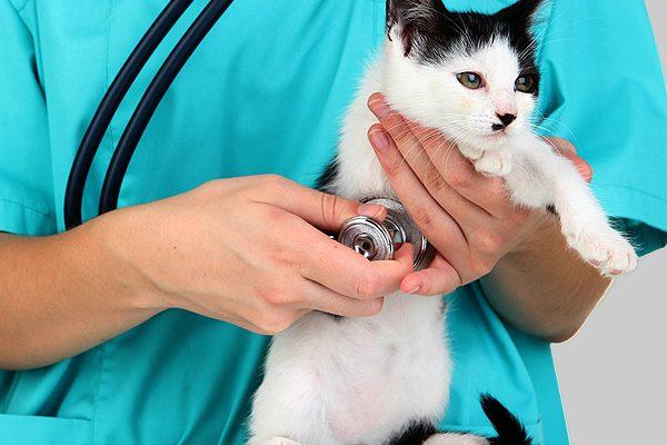 vet-new-kitten-spay-neuter.jpg