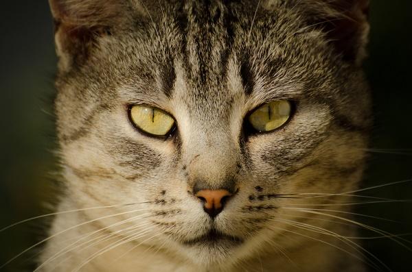 cat-eyes-shutterstock_259156328