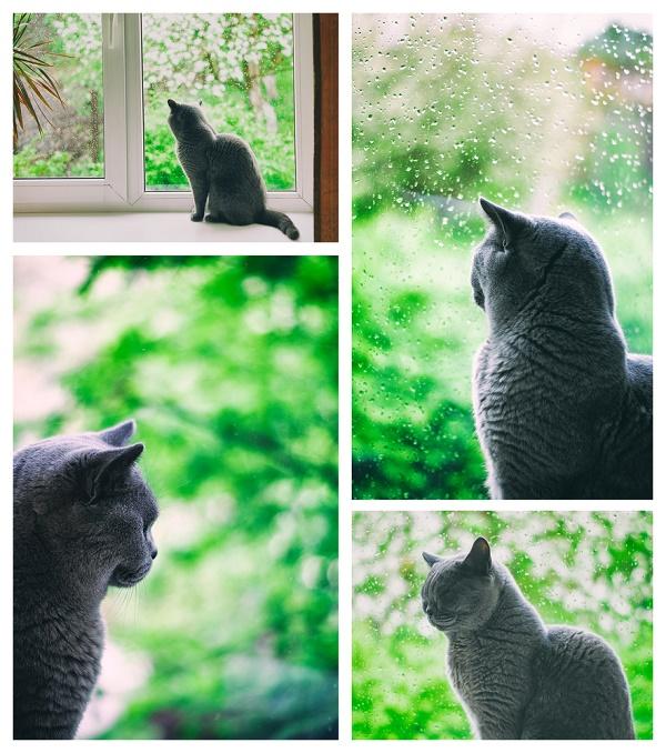 dark-silhoutte-cat-shutterstock_218643643