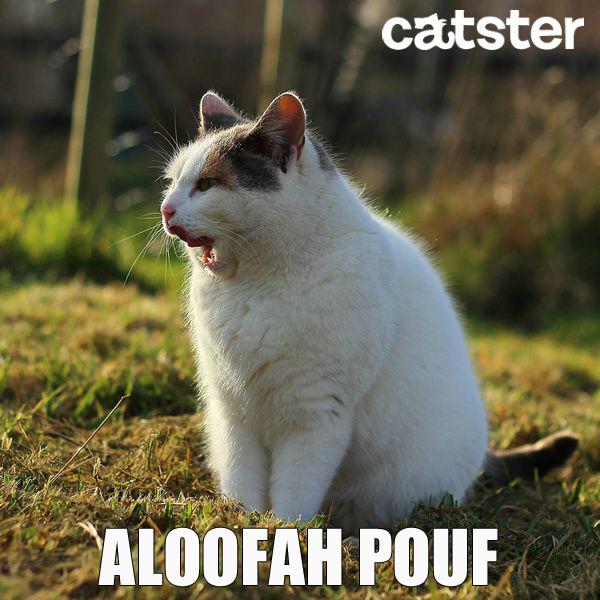 aloofah pouf cat puns