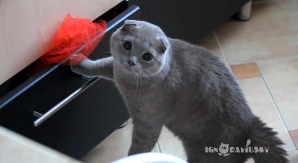 catster-cat criminal 17