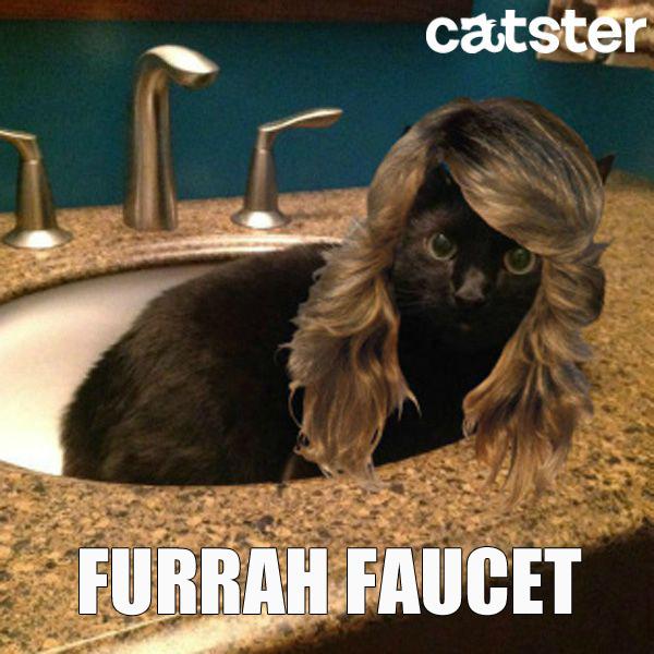 furrah-faucet-cat-puns