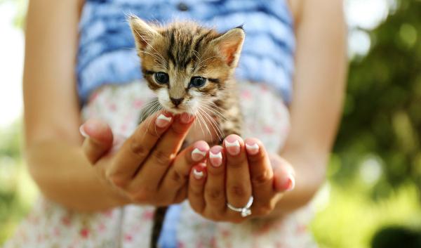 kitten-in-hand-210240190