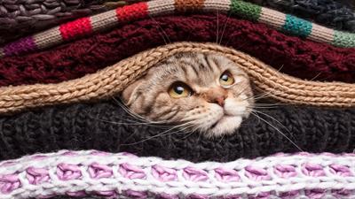 Cat in sweaters.