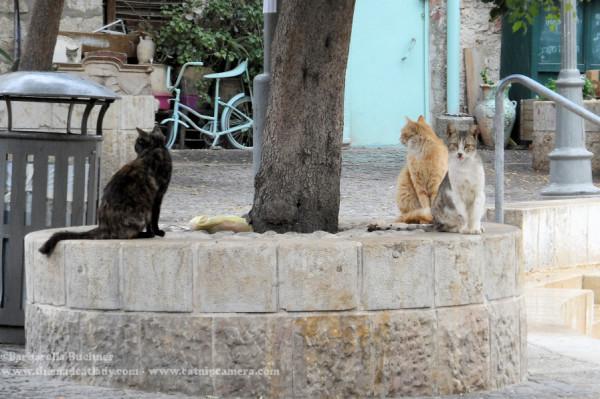 Jerusalem Street Cats