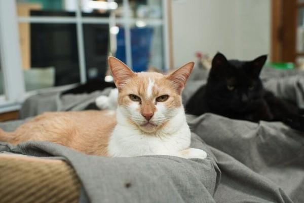 catster-kitten rescue-14
