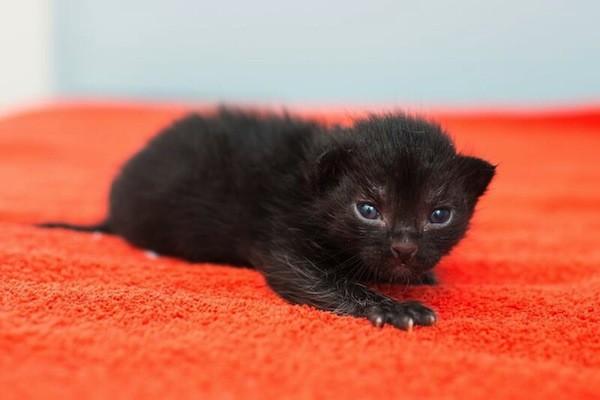 catster-kitten rescue-4