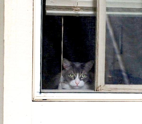 WindowCat6a