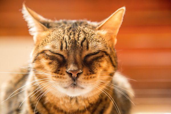 its-me-the-cat-stella