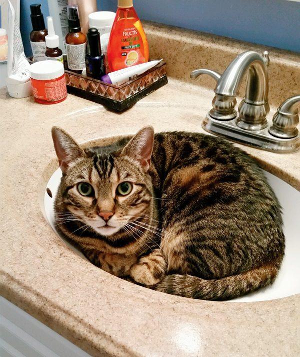 1-Pix-Fav-Spot-Oliver-sink