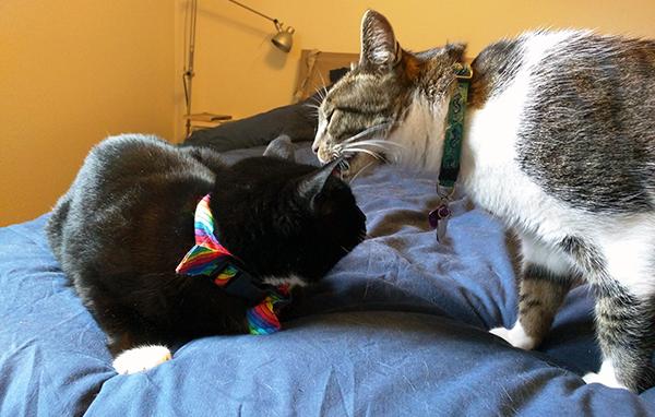 """Thomas and my """"surprise kitty,"""" Tara."""