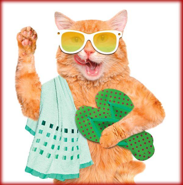 cat-quiz-hot-mess-283551092