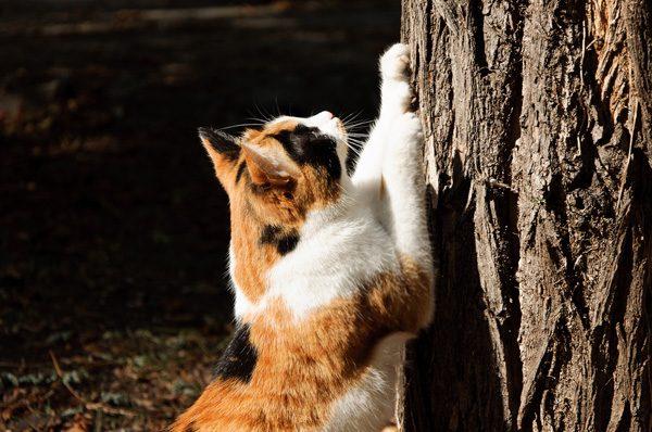 Cat marking her territory.