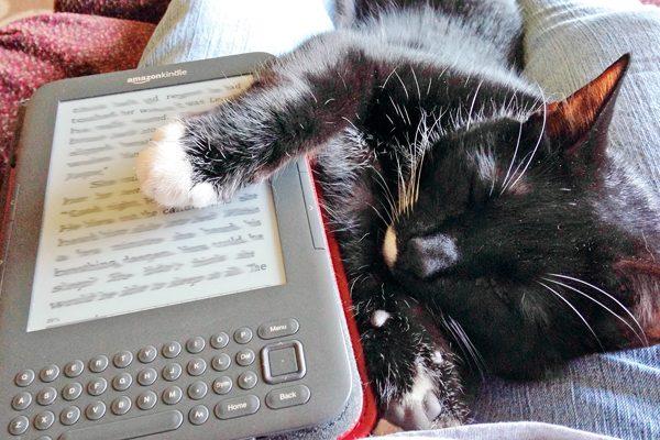 high-tech-cats-pix-Sinclair