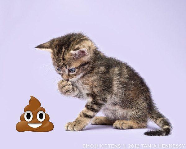 Emoji_Kittens_Tania_Hennessy_poop_©2016_Tania_Hennessy