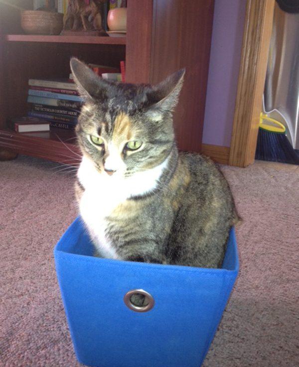phoebe-sassy-box