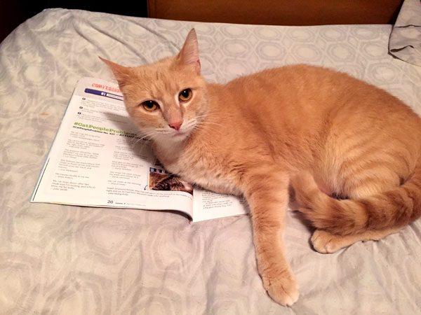 cat-mail-sit-on-lit-Ganondorf