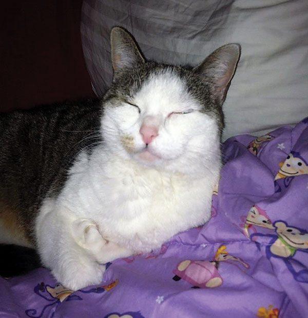 cats-spot-stealers-Bitzy