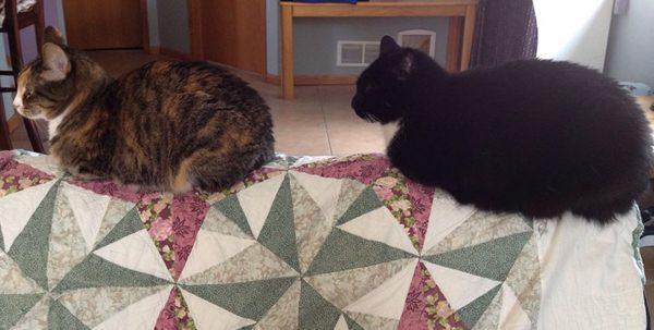 phoebe-cosmo-cats-train