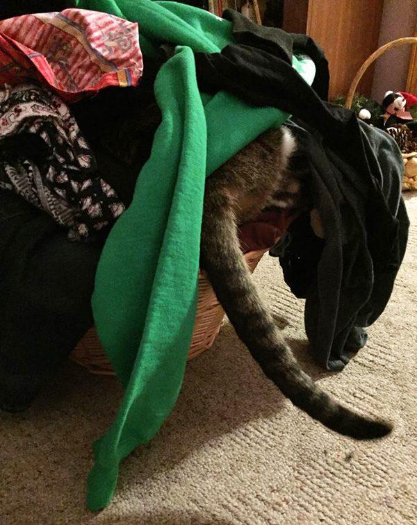 phoebe-laundry-basket-tail