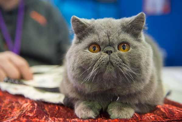 1-Supernova-Westminster-Cats-4