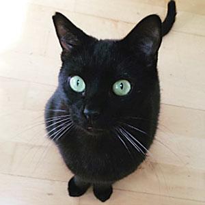 Suzy-Nakamura-cat-momo-01