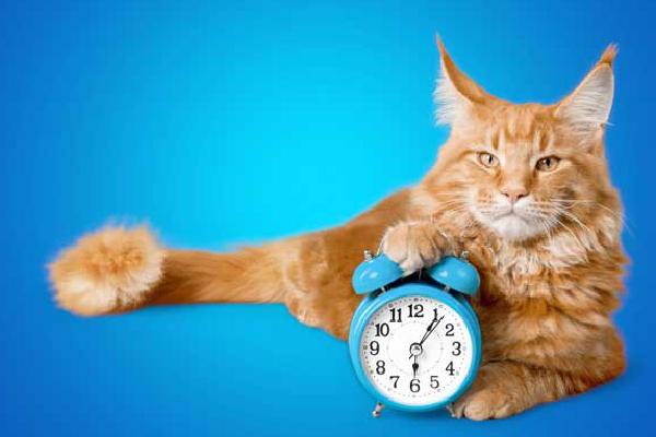 A cat with an alarm clock.