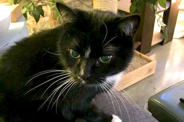cats-surprise-me-1