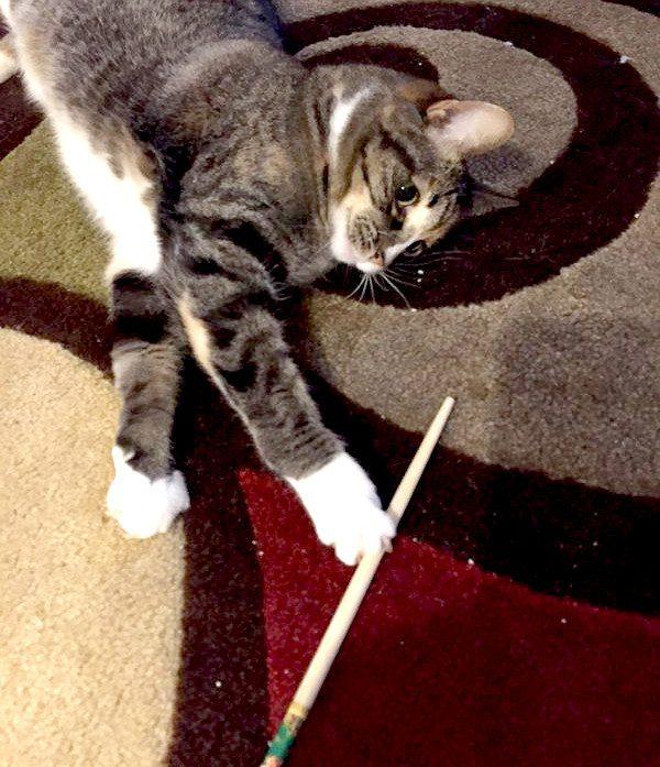 phoebe-chopstick
