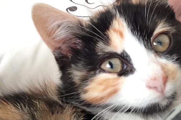 cat's nose change color