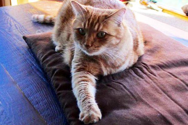 A three-legged cat.