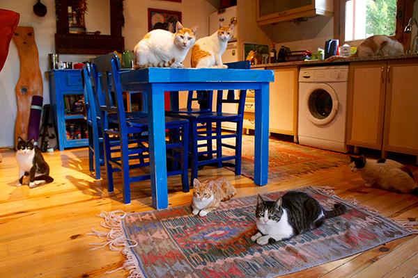 International catsitting.