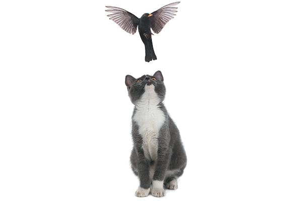 A cat looking up at a bird, jumping up at a bird.