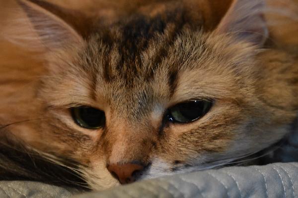 petsmart cat leash