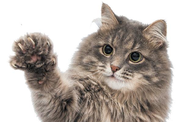 Excited Cat Video