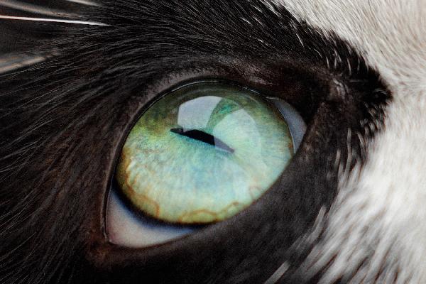 Closeup of a cat eye.