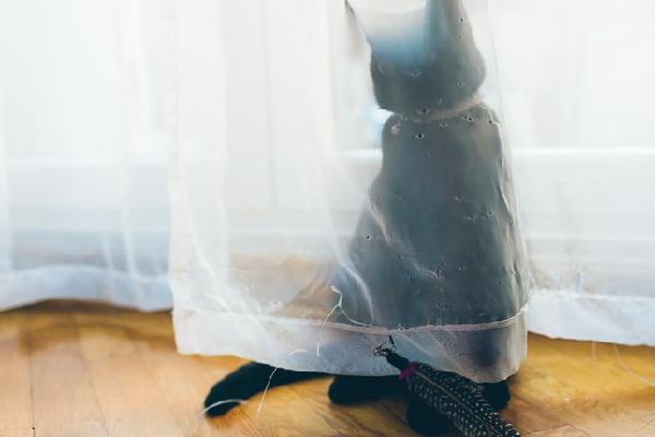 A black cat hiding behind a sheer curtain.