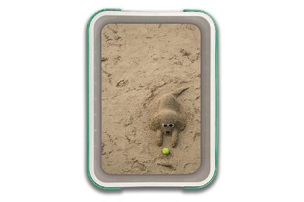 A cat litter box with a fun, beachy design.