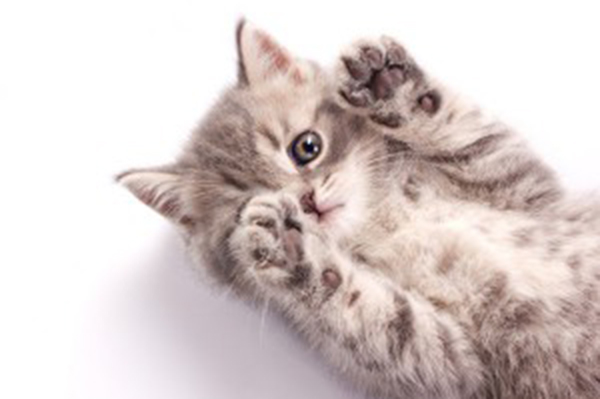 A happy kitten with his paws up.