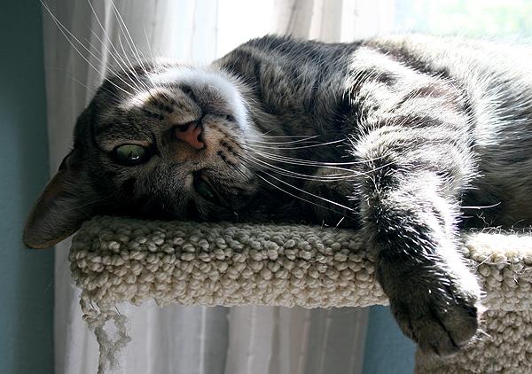 cat-outdoors-perch