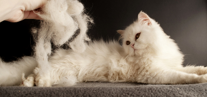 5 Tips to Surviving Cat-Hair Shedding Season - Catster