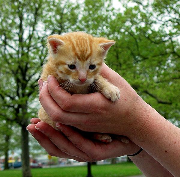 Kitten awaiting rescue