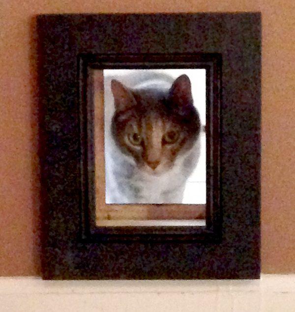 4-cat-door-katy-passageway